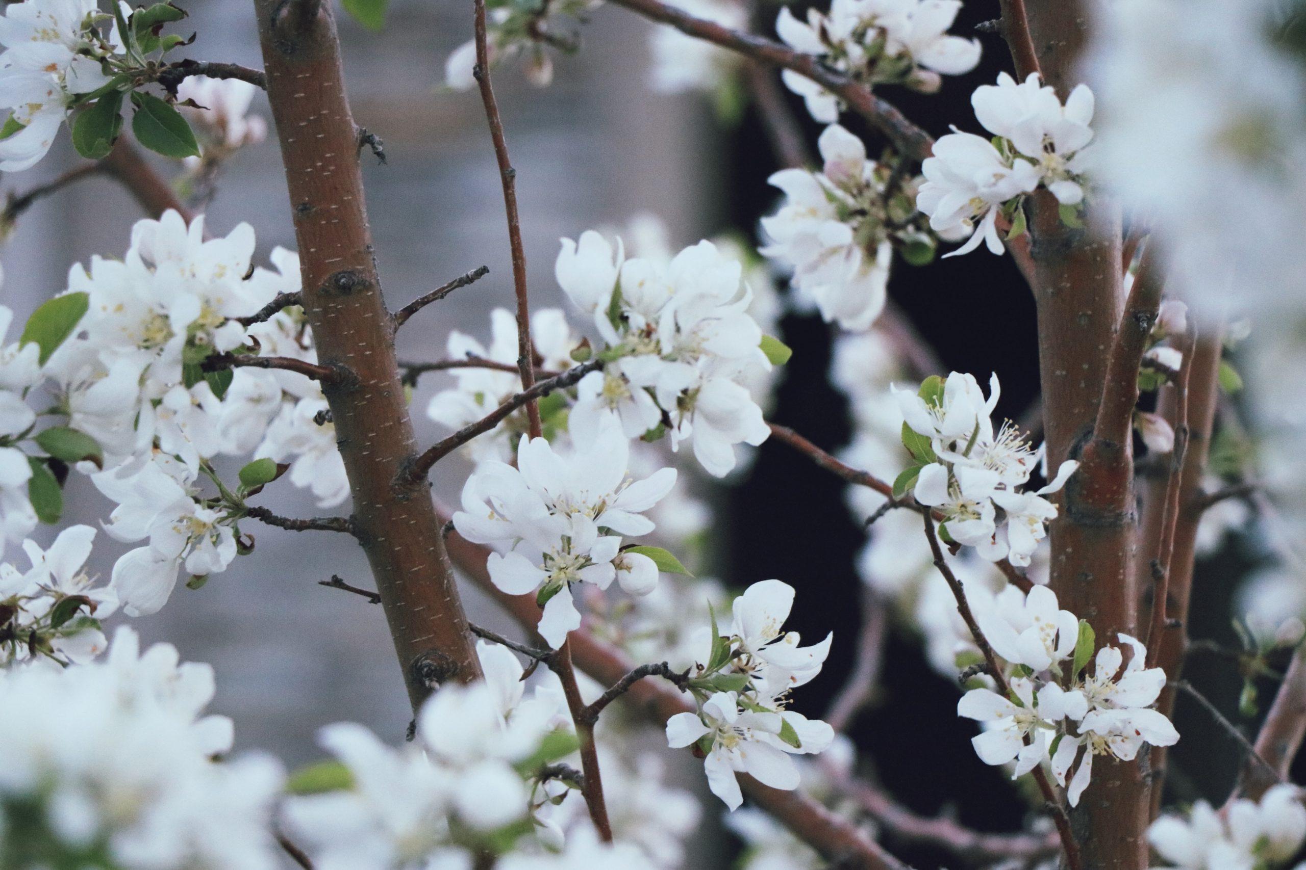 A Pruning Season